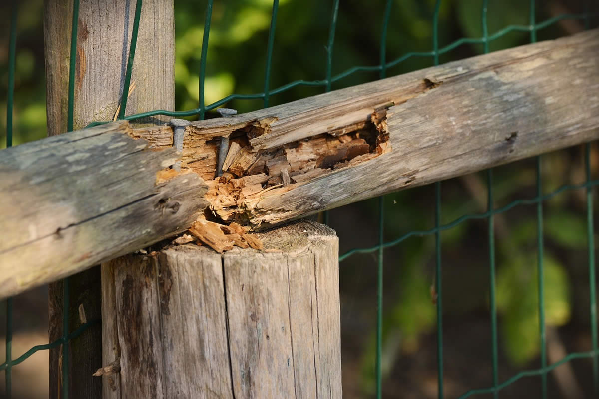 5 Signs that Your Wooden Fence is Due for Replacement