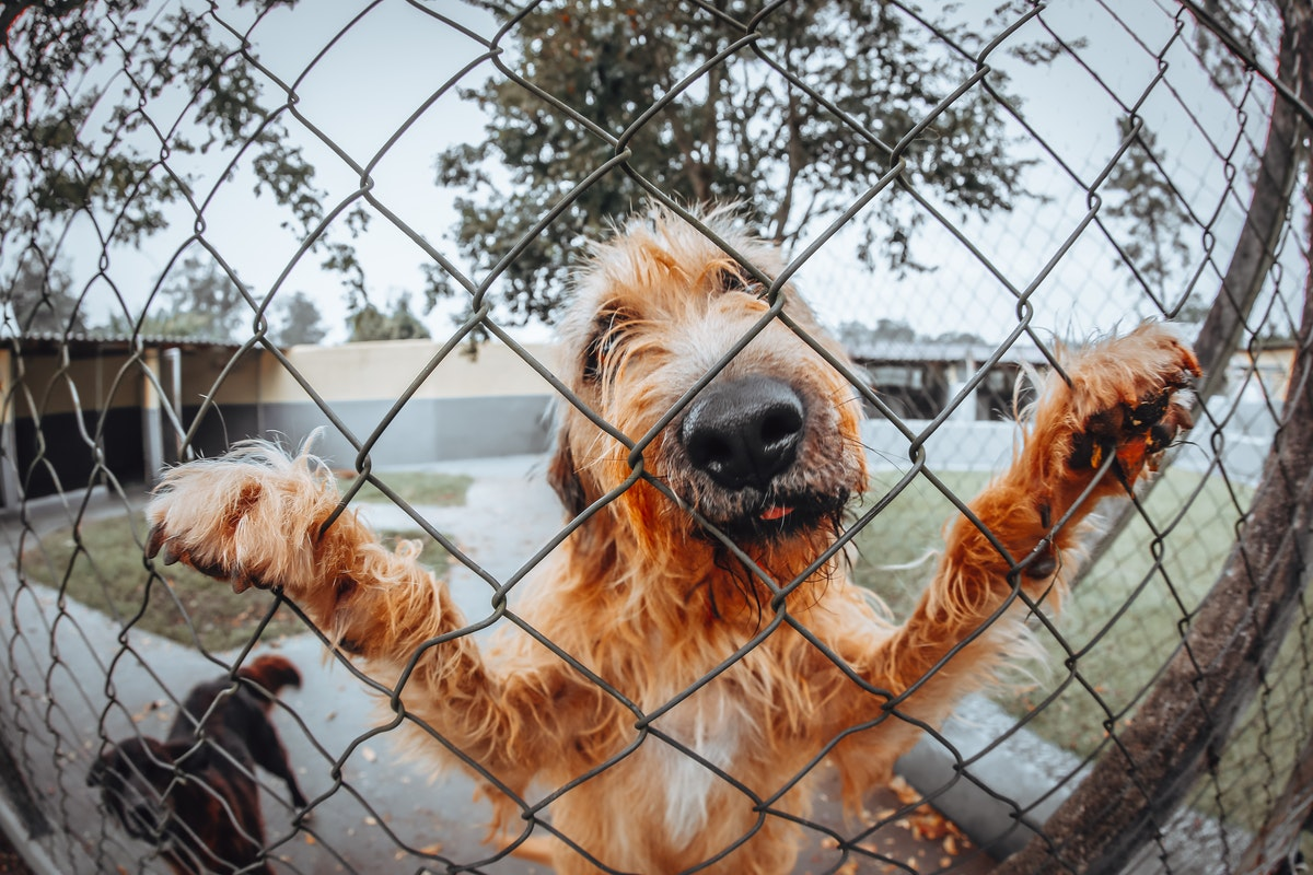 Why You Need to Install a Fence for Your Dog